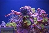 07_Aquarium.jpg