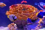08_Aquarium.jpg
