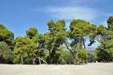 03_Trees at Epidaurus Theatre.jpg