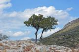 09_Mycenae Archaeological Site.jpg
