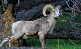 Gallery: North American Mammals
