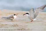 Birds of Israel by Order