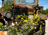 rusty car with yellow flowers