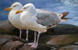 2 Gulls, Monhegan