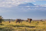 M4_10985 - Elephants and Mt. Kilimanjaro