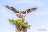 Florida Birding 2015