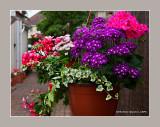 Janette's Summer Garden 2013