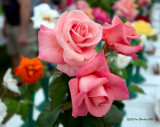 Colchester Rose Show 2015