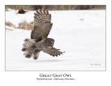 Great Gray Owl-166