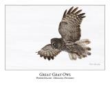 Great Gray Owl-170