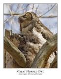 Great Horned Owl-028