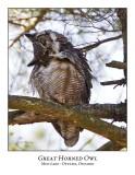 Great Horned Owl-029