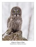 Great Gray Owl-172