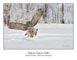 Great Gray Owl-174