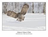 Great Gray Owl-175