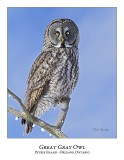 Great Gray Owl-176