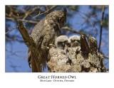 Great Horned Owl-030