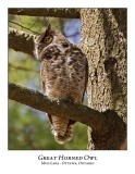 Great Horned Owl-031