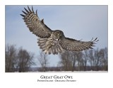 Great Gray Owl-182