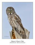 Great Gray Owl-183