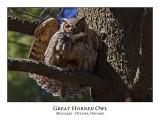 Great Horned Owl-032