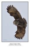 Great Gray Owl-186
