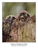 Great Horned Owl-033