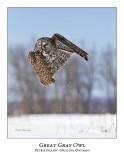 Great Gray Owl-197
