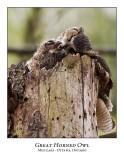 Great Horned Owl-037