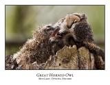 Great Horned Owl-038