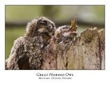 Great Horned Owl-039