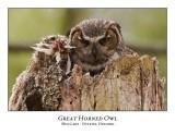 Great Horned Owl-041