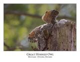 Great Horned Owl-044