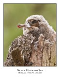 Great Horned Owl-045