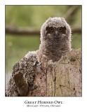 Great Horned Owl-048