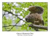 Great Horned Owl-053