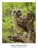 Great Horned Owl-060