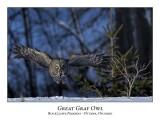 Great Gray Owl-198