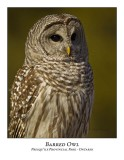 Barred Owl-034