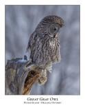 Great Gray Owl-200