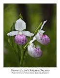 Flower/Plant-023