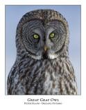 Great Gray Owl-202