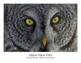 Great Gray Owl-203