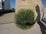 Plant Ball of Green