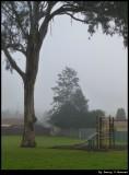 Fog - morning in June @ 8.30am