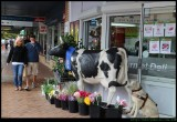 The Berry Cow