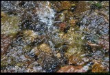 Reflections - Jenolan Caves Creek