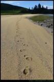 Settlement Beach - footsteps