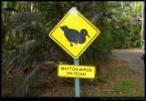Mutton Bird sign