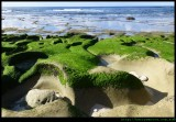 Middle Beach - sea grass at low tide, LHI